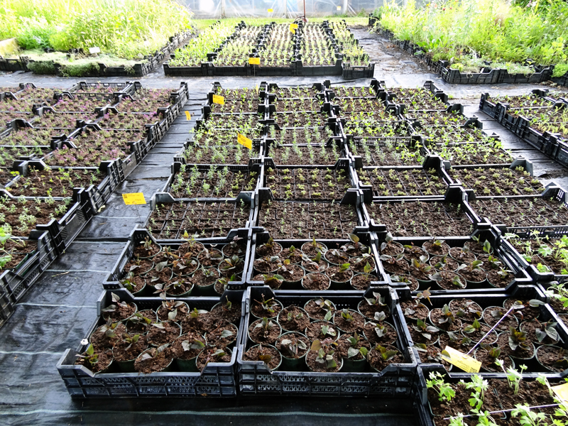young plants in the nursery